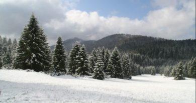 šuma snijeg