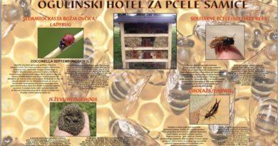 hotel za pčele