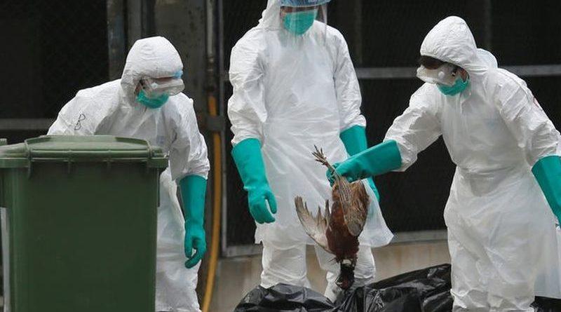 Ptičja gripa