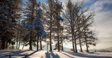 marinsko drveće zima ist