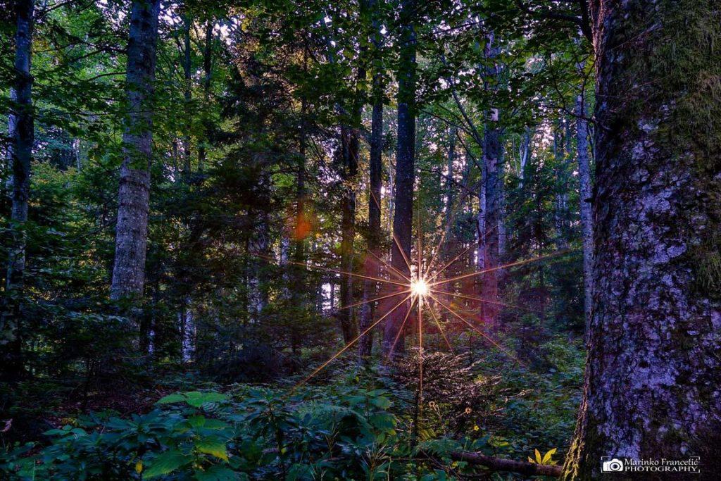 marinko šuma sun 1