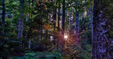 marinko šuma sun 2