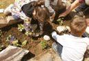 Mališani sadili cvijeće…