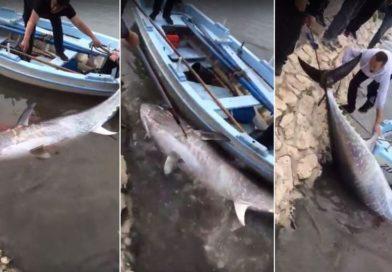 ' Pogledajte epsku borbu ribara iz Bibinja i kapitalca