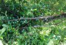 Uništeni privatni voćnjaci u Općini Tounj