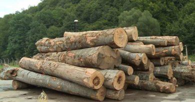 Moguća je prodaja ogrjeva do 30 m3 po kućanstvu, a plaćanje je avansno, gotovinsko
