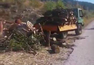 Ovako se u Dalmaciji istovaraju drva