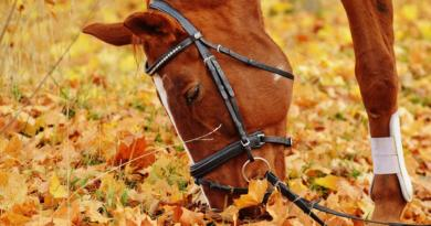 horse-1006375_1280