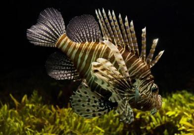"Krule – ""…a naše ribe u Saboru….."""
