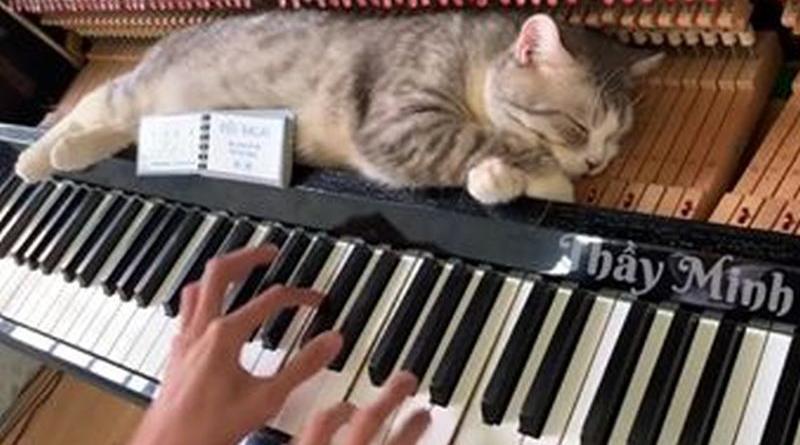 mačka na klaviru ist
