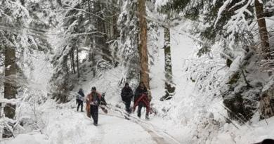 migranti u šumi ist