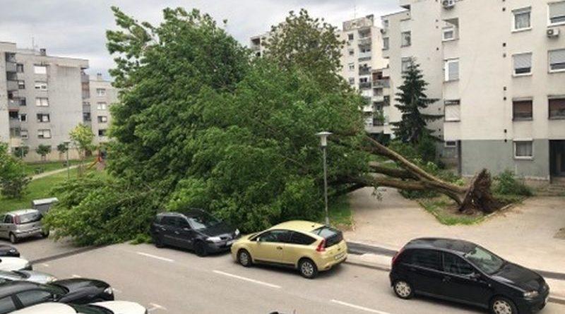 vjetar srušio drvo ist