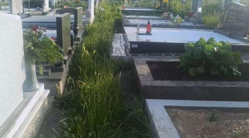 groblje trava ist