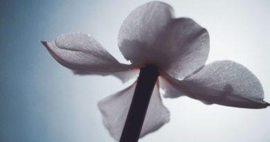 luce cvijet ist