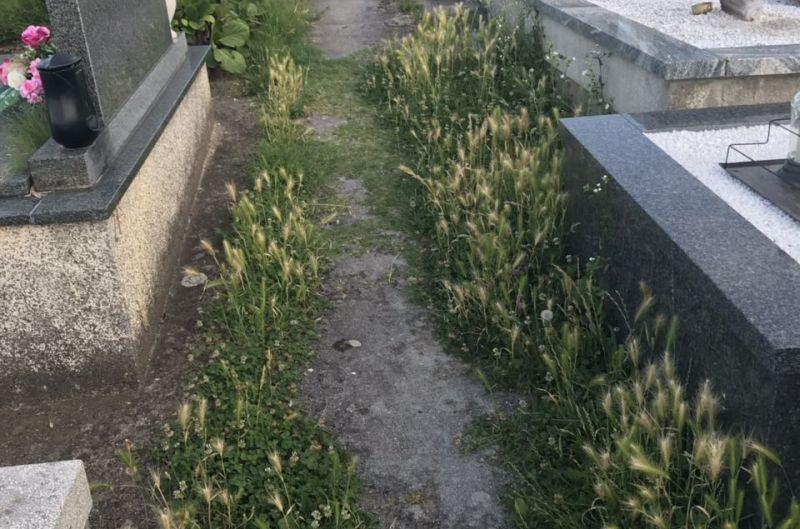groblje-dubovac-2 ist