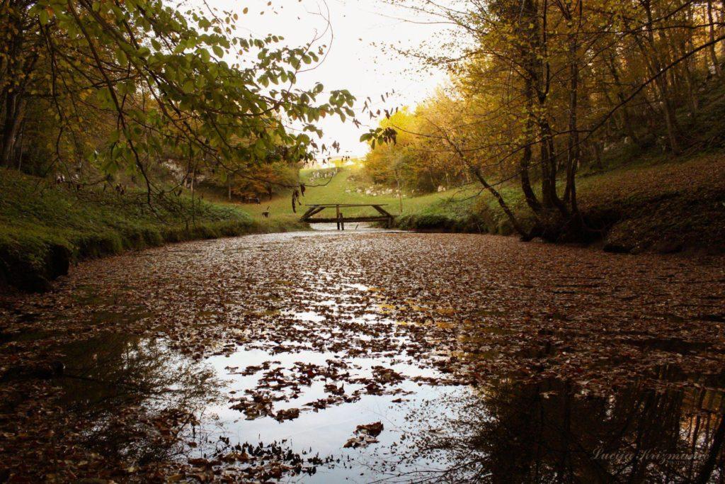 Lucije Šmitovo jesen