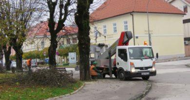 orezivanje drveća u gradu ist