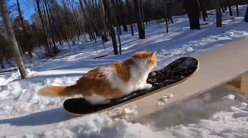 mačak skejt ist