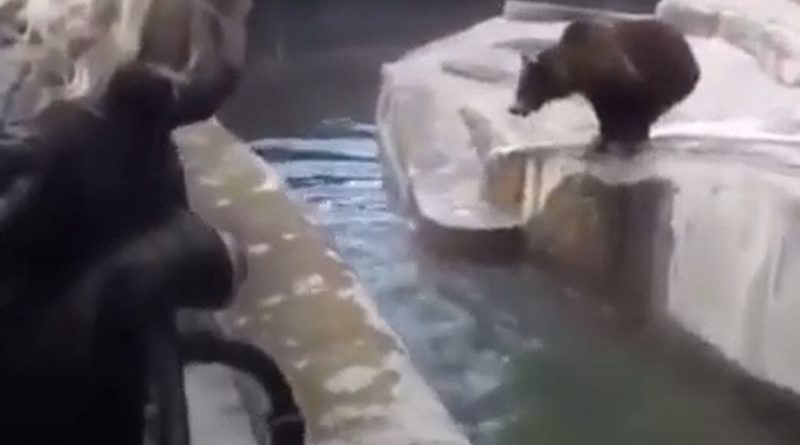 medvjedi ist